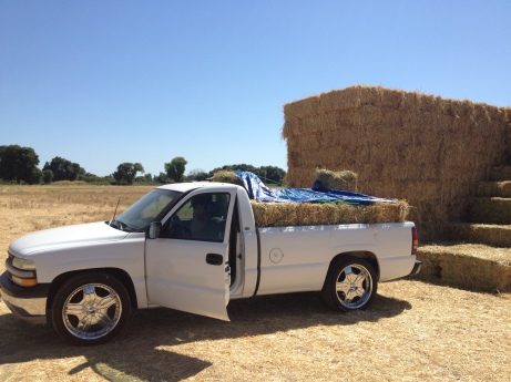 Low cost hay at $5 per bale on Craigslist